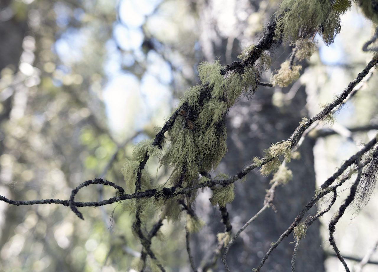 Contemporary art photography of Lichen in Wyoming