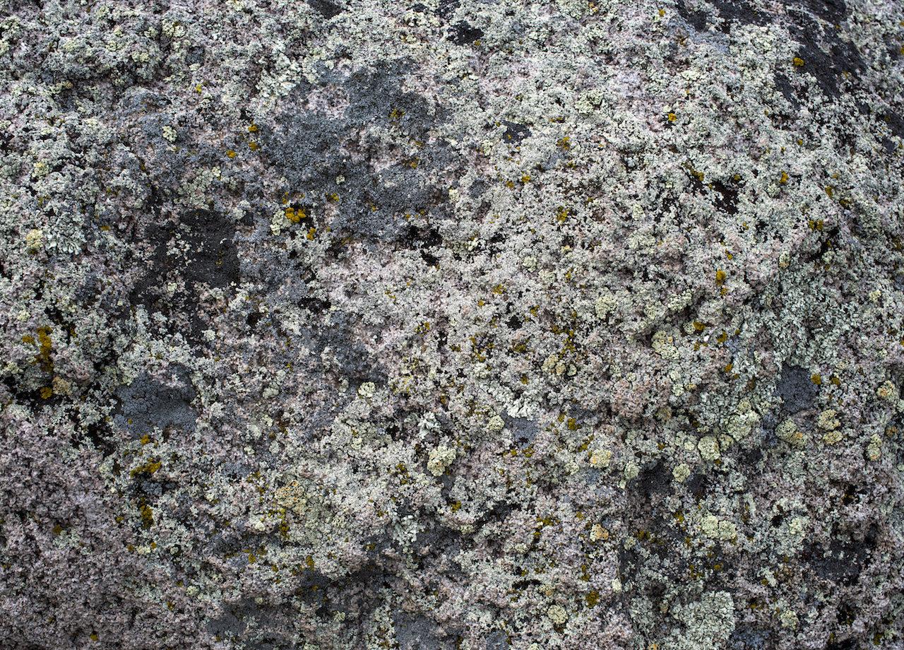 Lichen- Vales Caldera