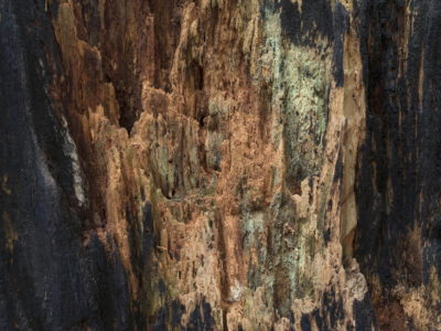 burnt redwood interior Immersed in an Ancient Forest: The California Redwoods- contemporary photography series by Lincoln Schatz