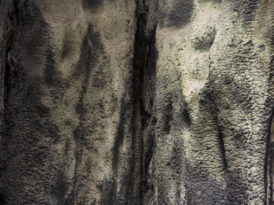 burnt redwood Immersed in an Ancient Forest: The California Redwoods- contemporary photography series by Lincoln Schatz