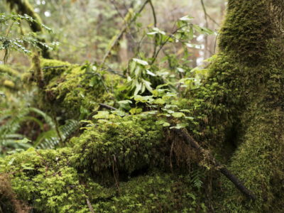 forest floor Immersed in an Ancient Forest: The California Redwoods- contemporary photography series by Lincoln Schatz